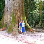 Face To Face With The Biggest Tree In West Africa