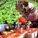Ghana's Agribusinesses Ready To Explore European Union Markets